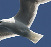 Soaring Seagull Sticker