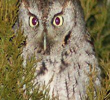owl 3 by ryan  munson