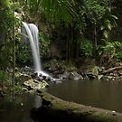 Fresh in the Rainforest - Curtis Falls by Barbara Burkhardt