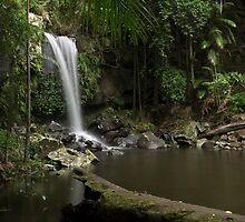 Fresh in the Rainforest - Curtis Falls by Barbara Burkhardt