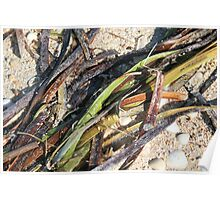 Seaweed on the beach. Poster