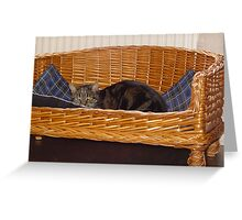 Cat in Dog Basket II Greeting Card