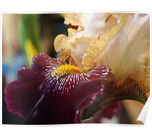 Abstract Iris Poster