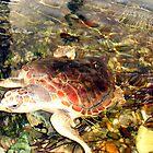 I Turtle by RebeccaBlackman