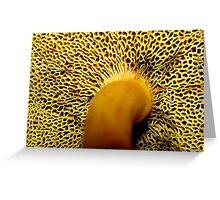 Underside Greeting Card