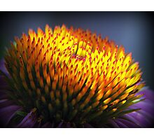 Red Tips Photographic Print