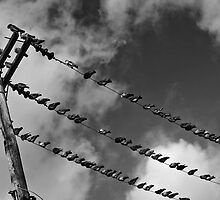 Bird on a Wire by Wendy Mogul