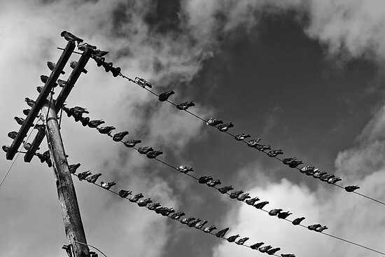 Bird on a Wire by AngelPhotozzz