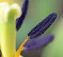 Stamen for You by jasmineari