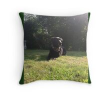 black lab Throw Pillow