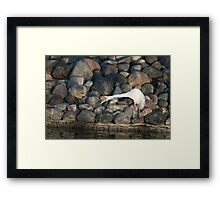Streched to the max!! Framed Print