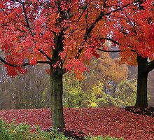 Autumn in Newark by Gayle Dolinger