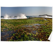 Mona Vale / low tide / sunset Poster