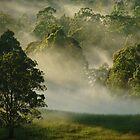 """""""Sunshine & Mist"""" by debsphotos"""