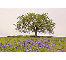 Spring on a Volcanic Plateau Photographic Print