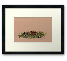 Tulips - original drawing  Framed Print