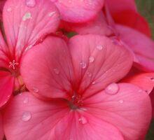 Flowers in the Rain by Carmen Taylor