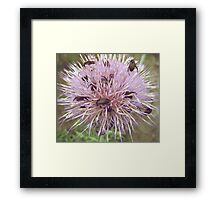 Crowded Thistle Framed Print