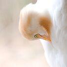 Bright white bird by richardseah