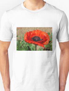 Beauties Brilliance  T-Shirt