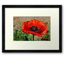 Beauties Brilliance  Framed Print
