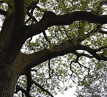 Branches by Donna Chapman