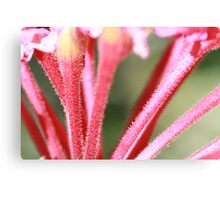 flowers macro Canvas Print