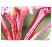 flowers macro Poster