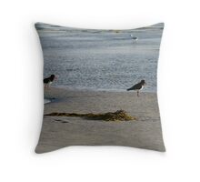 Pied Oyster Catchers  Throw Pillow