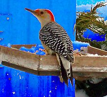 Bird at the feeder  by Michelle BarlondSmith