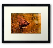 Withered rose Framed Print