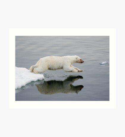 Polar bear diving into sea. Art Print