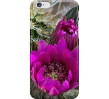 Pink Hedgehog Cactus  iPhone Case/Skin
