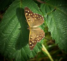 Speckled Wood Butterfly. by Rob Parsons