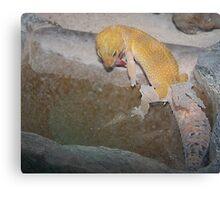 Gecko Shedding It's Skin Canvas Print