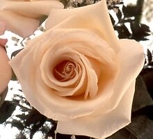 Rose in a Bouquet by Roger Otto