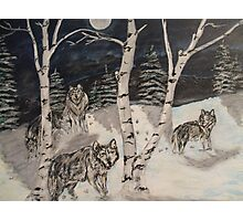 Wolves in the woods Photographic Print