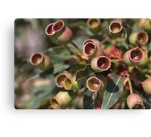 After The Flowers Gumnuts Canvas Print