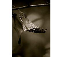 Leaf Close Up Photographic Print