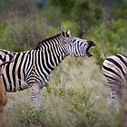 Zebra Speaks Up by Tobin Rogers