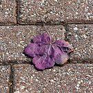Falling leaf by monaiman