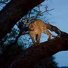 Leopard in a Tree - Blue by Tobin Rogers