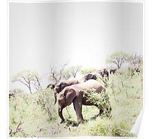 Elephants Grazing at Mkhaya Reserve Poster