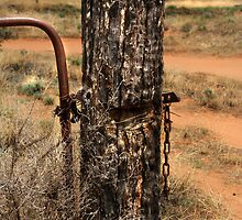 Fence Post  by diddle