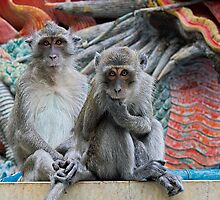 Two Little Monkeys by Mike Stone