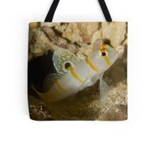 Sailfin Blemey Tote Bag