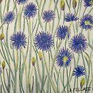 Cornflowers by Alexandra Felgate