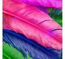 Colorful feathers by UniqueCase