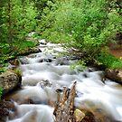 Rocky Mountain Stream by Gregory Ballos | gregoryballosphoto.com