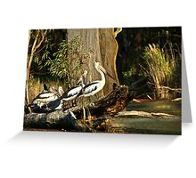 Murray River Pelicans Greeting Card